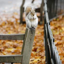 hoje-e-o-inicio-do-outono